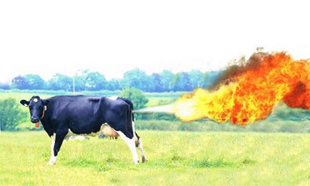 Kijk die koeien loeien!